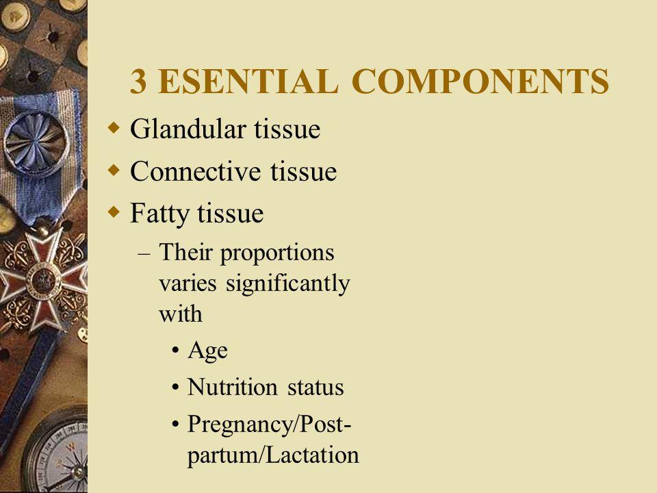 3 ESENTIAL COMPONENTS Glandular tissue Connective tissue Fatty tissue