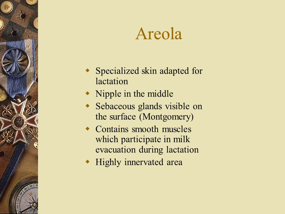 Areola Specialized skin adapted for lactation Nipple in the middle
