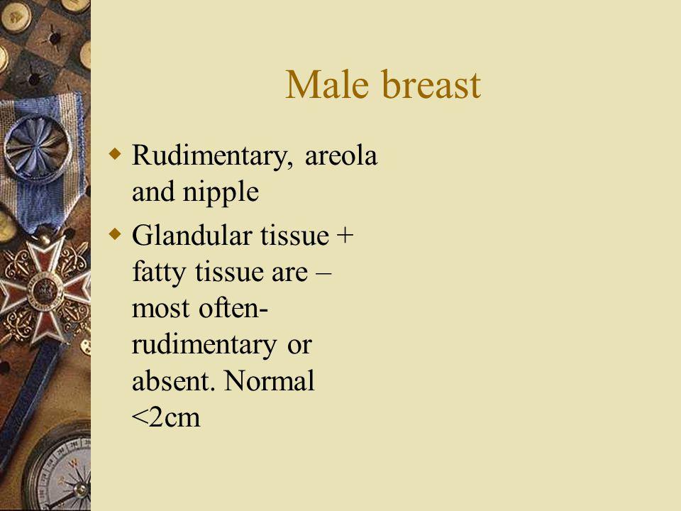 Male breast Rudimentary, areola and nipple