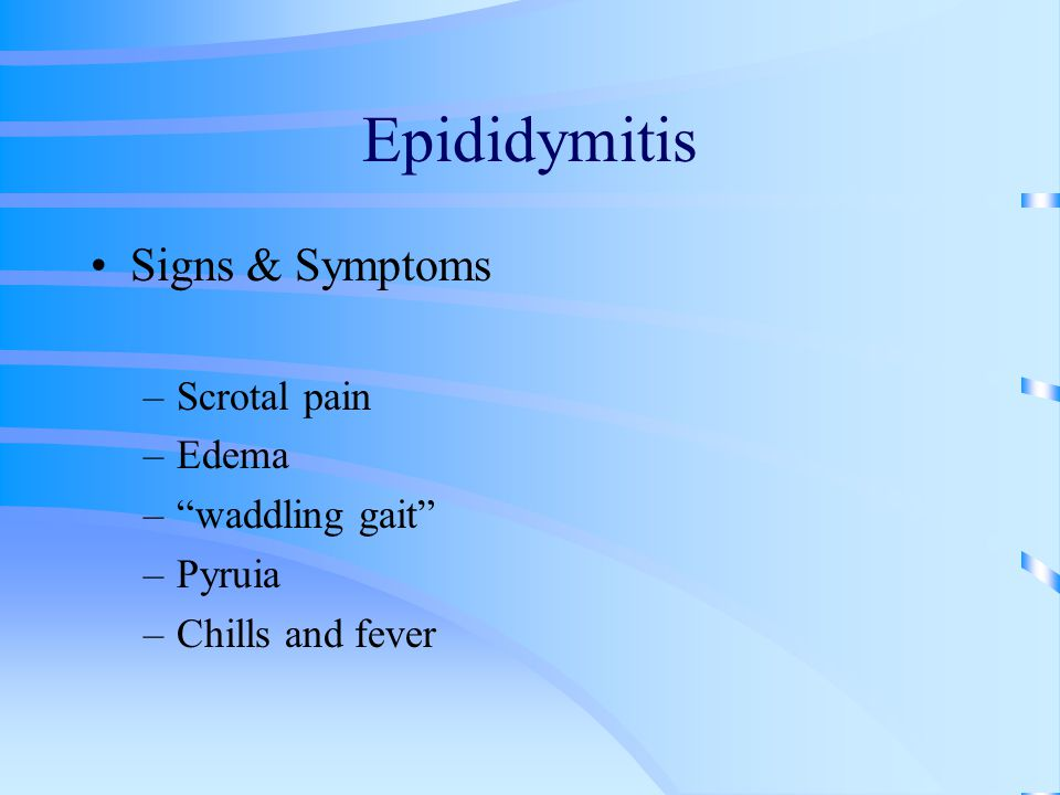 Epididymitis Signs & Symptoms Scrotal pain Edema waddling gait