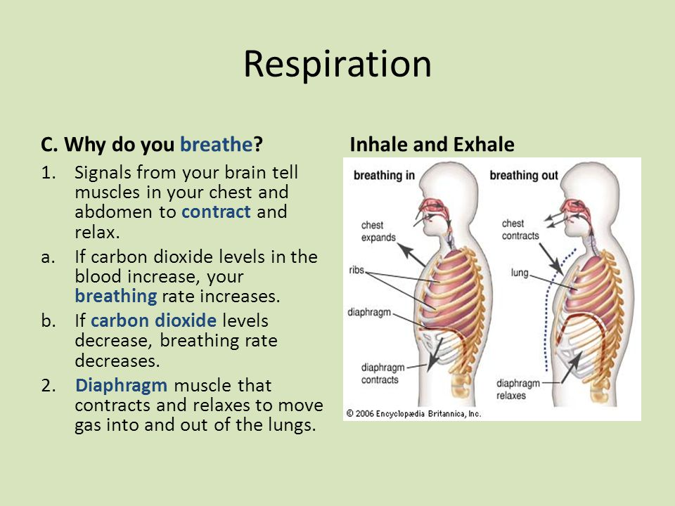 Respiration C. Why do you breathe Inhale and Exhale
