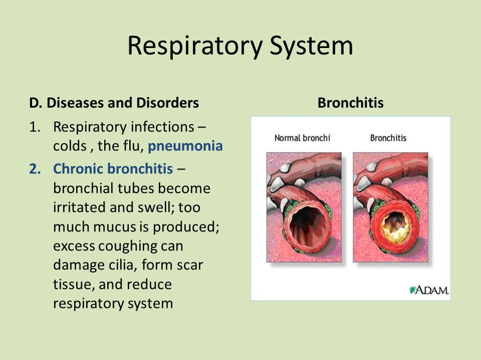 Respiratory System D Diseases And Disorders Bronchitis