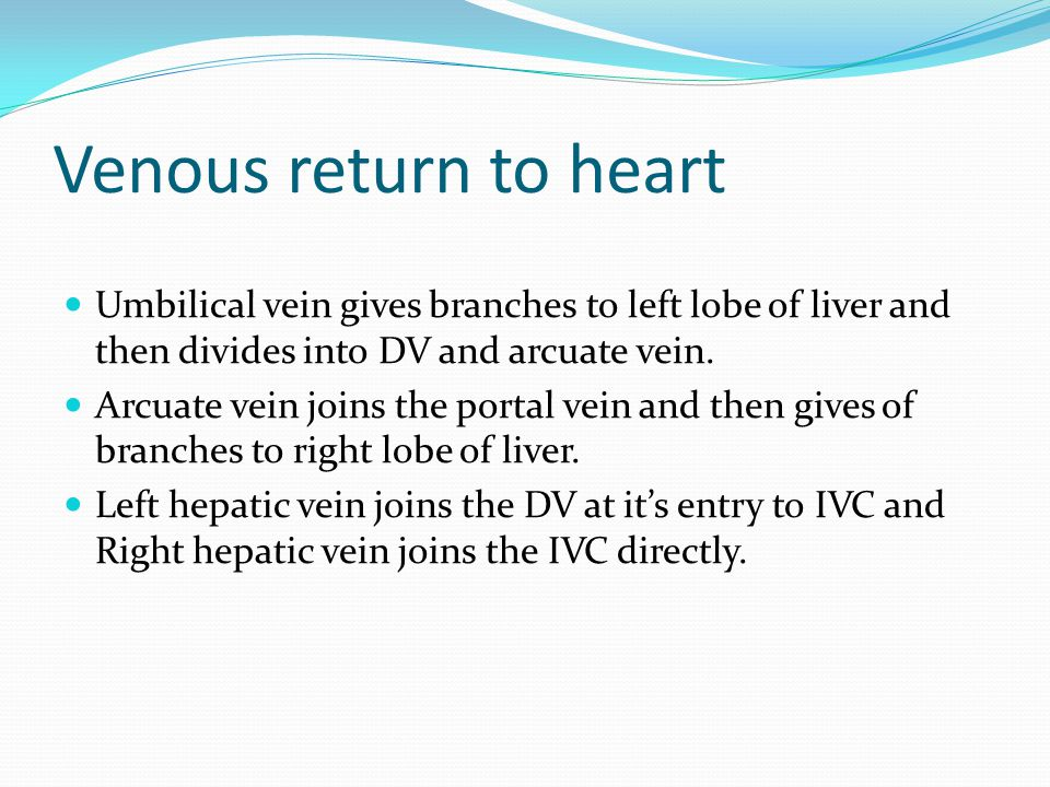 Venous return to heart Umbilical vein gives branches to left lobe of liver and then divides into DV and arcuate vein.