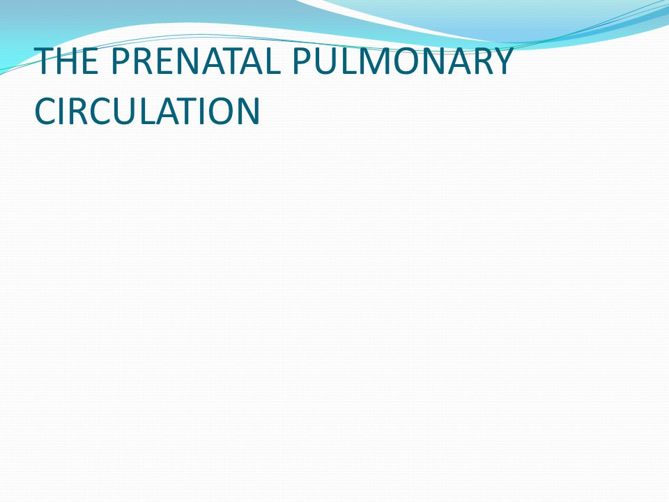 THE PRENATAL PULMONARY CIRCULATION
