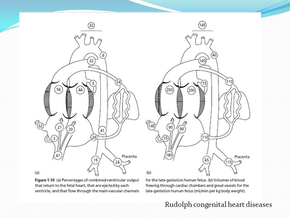 Rudolph congenital heart diseases