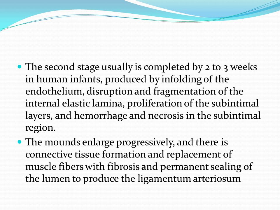 The second stage usually is completed by 2 to 3 weeks in human infants, produced by infolding of the endothelium, disruption and fragmentation of the internal elastic lamina, proliferation of the subintimal layers, and hemorrhage and necrosis in the subintimal region.