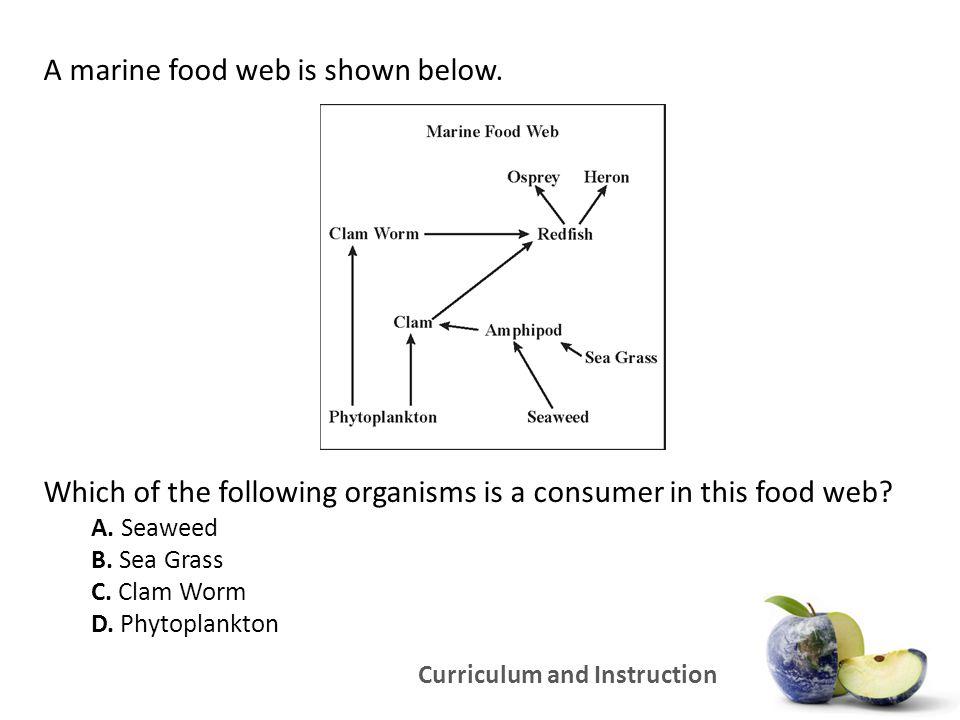 A marine food web is shown below.