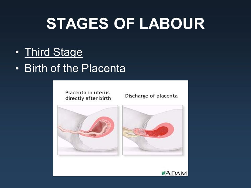 STAGES OF LABOUR Third Stage Birth of the Placenta