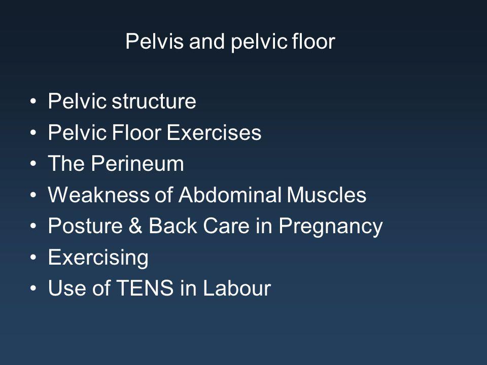 Pelvis and pelvic floor