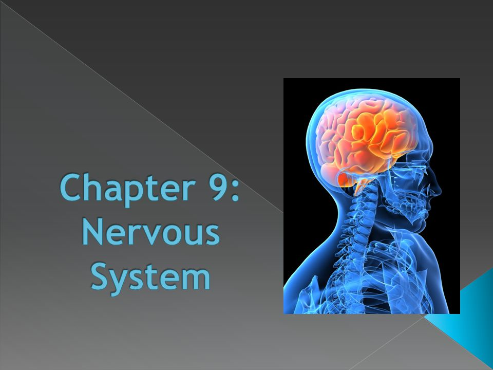 Chapter 9: Nervous System - ppt video online download