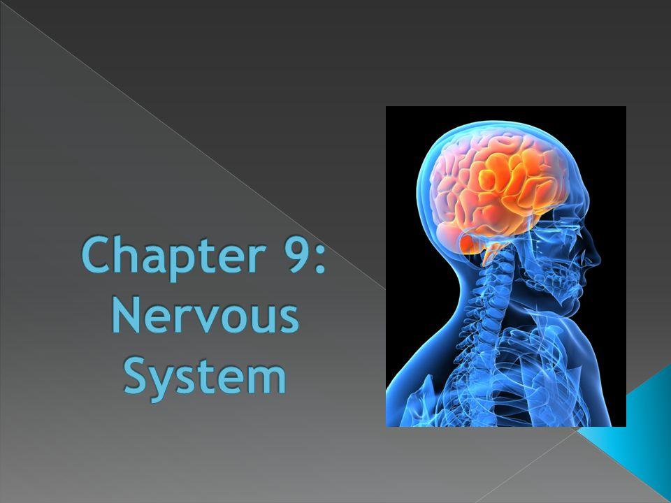 Chapter 9: Nervous System - ppt video online download