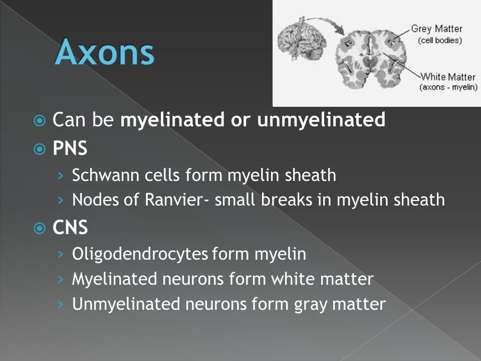 Axons Can be myelinated or unmyelinated PNS CNS