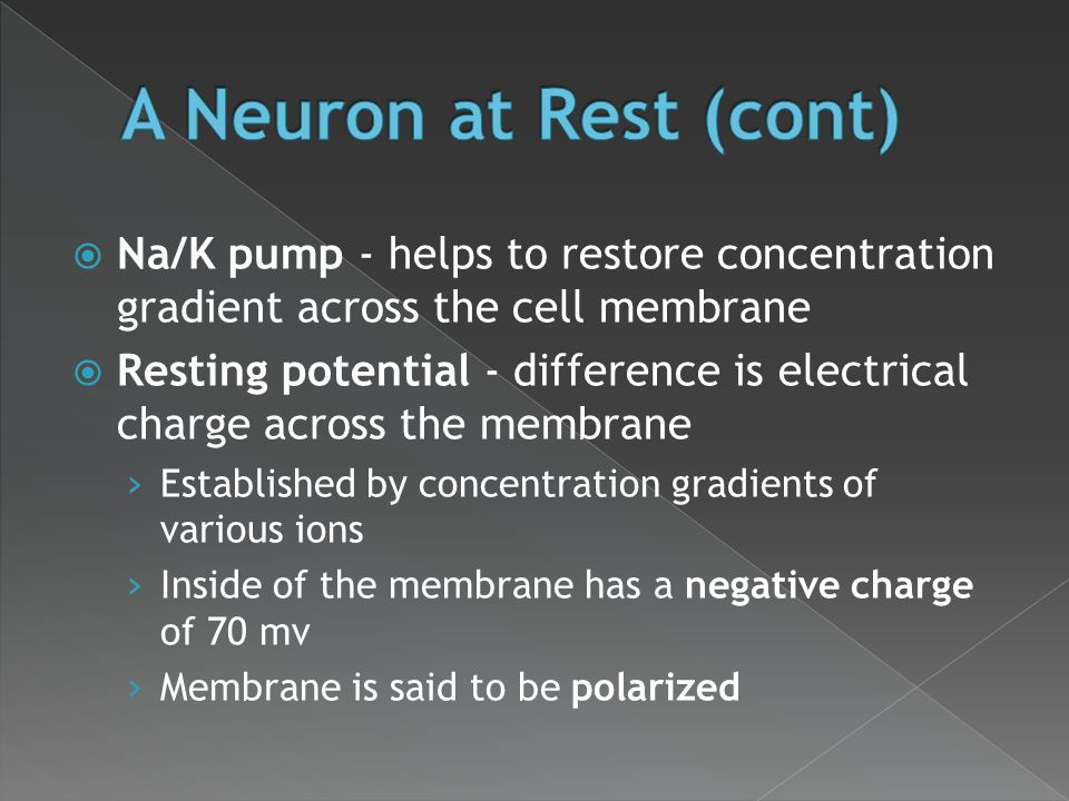 A Neuron at Rest (cont) Na/K pump - helps to restore concentration gradient across the cell membrane.