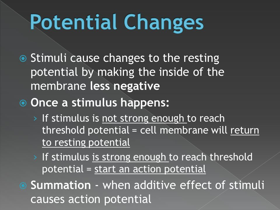 Potential Changes Stimuli cause changes to the resting potential by making the inside of the membrane less negative.