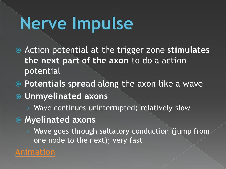 Nerve Impulse Action potential at the trigger zone stimulates the next part of the axon to do a action potential.