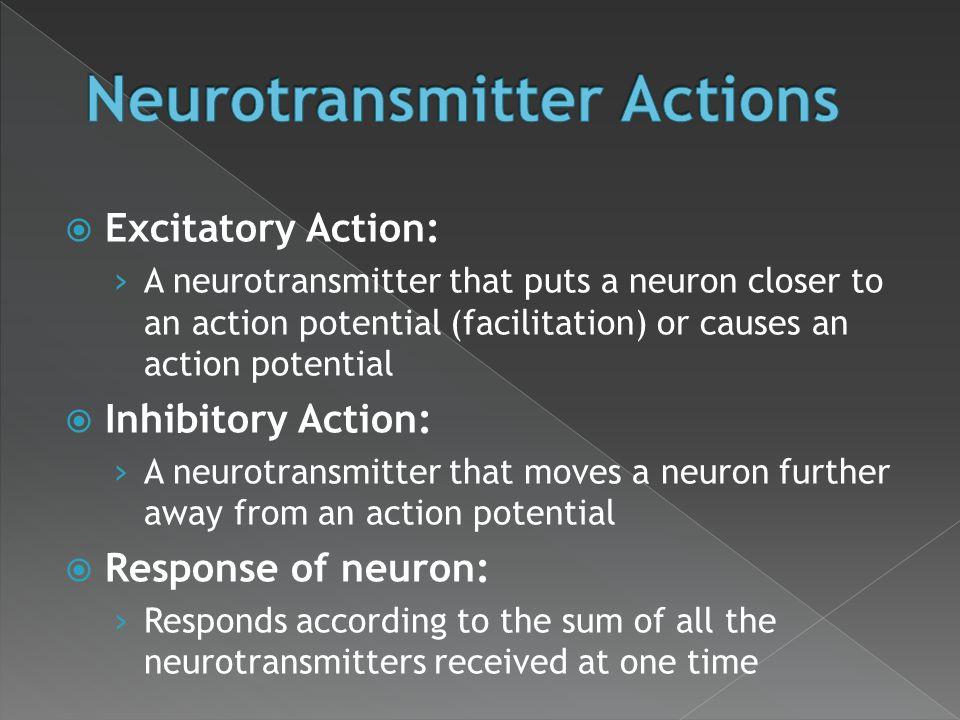 Neurotransmitter Actions