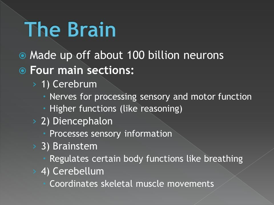 The Brain Made up off about 100 billion neurons Four main sections: