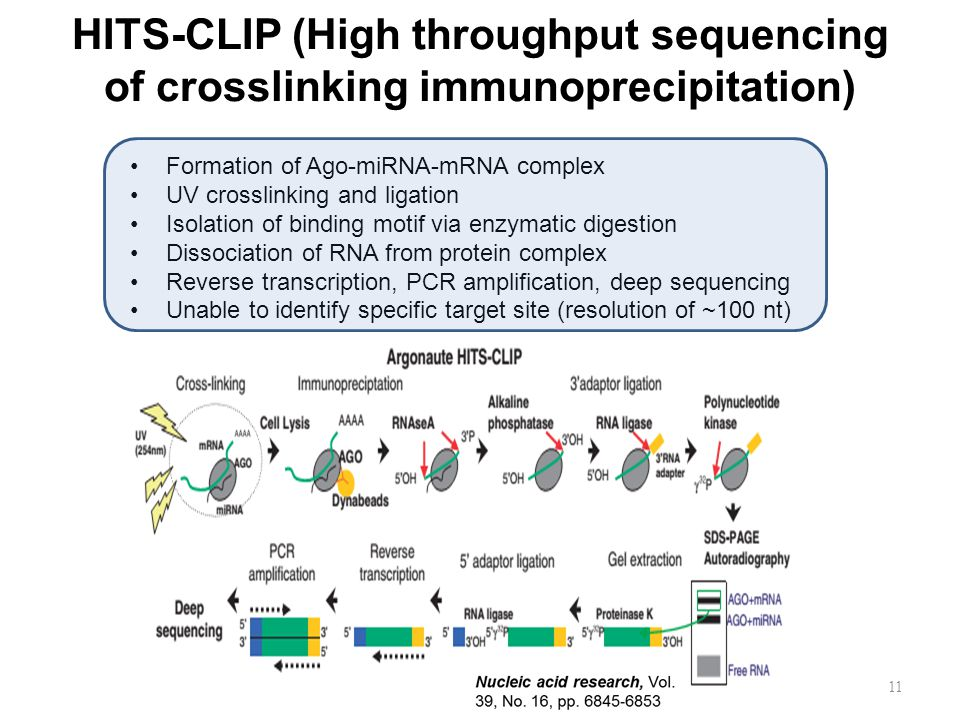 HITS-CLIP (High throughput sequencing of crosslinking immunoprecipitation)
