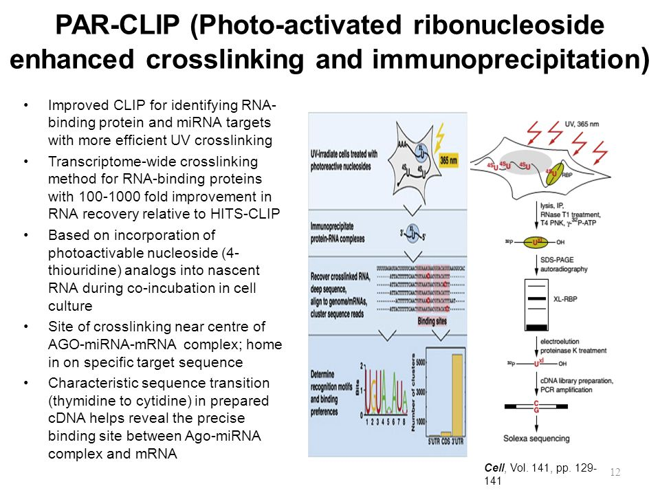 PAR-CLIP (Photo-activated ribonucleoside enhanced crosslinking and immunoprecipitation)