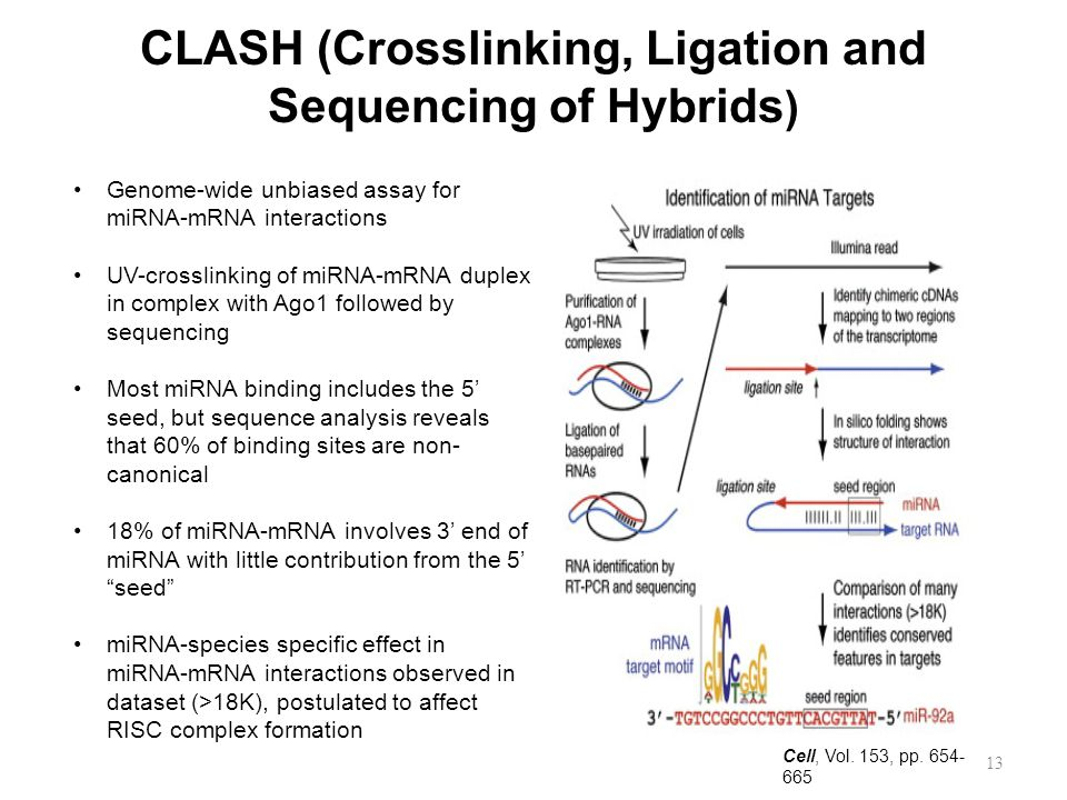 CLASH (Crosslinking, Ligation and Sequencing of Hybrids)