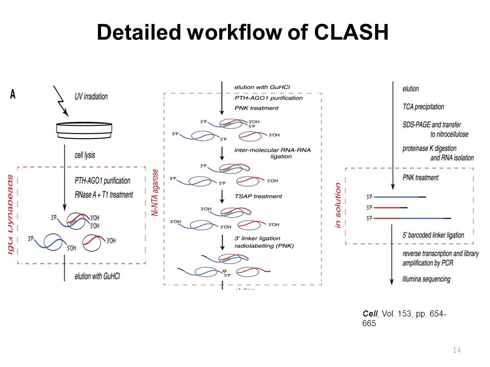 Detailed workflow of CLASH