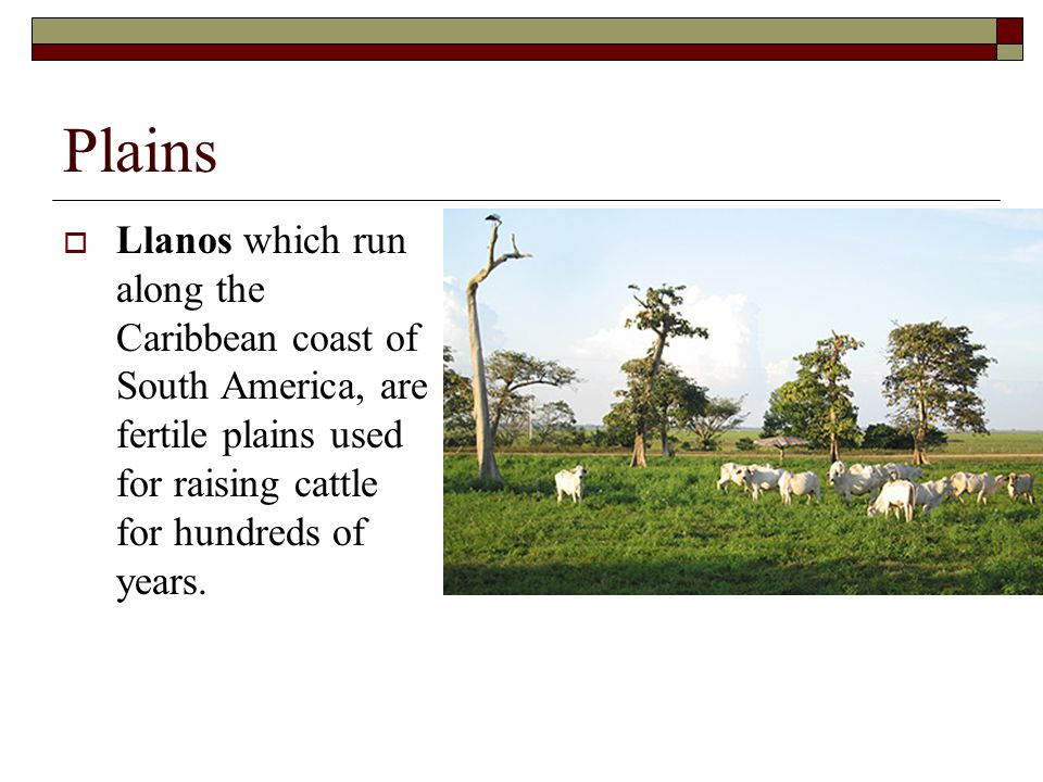 Plains Llanos which run along the Caribbean coast of South America, are fertile plains used for raising cattle for hundreds of years.