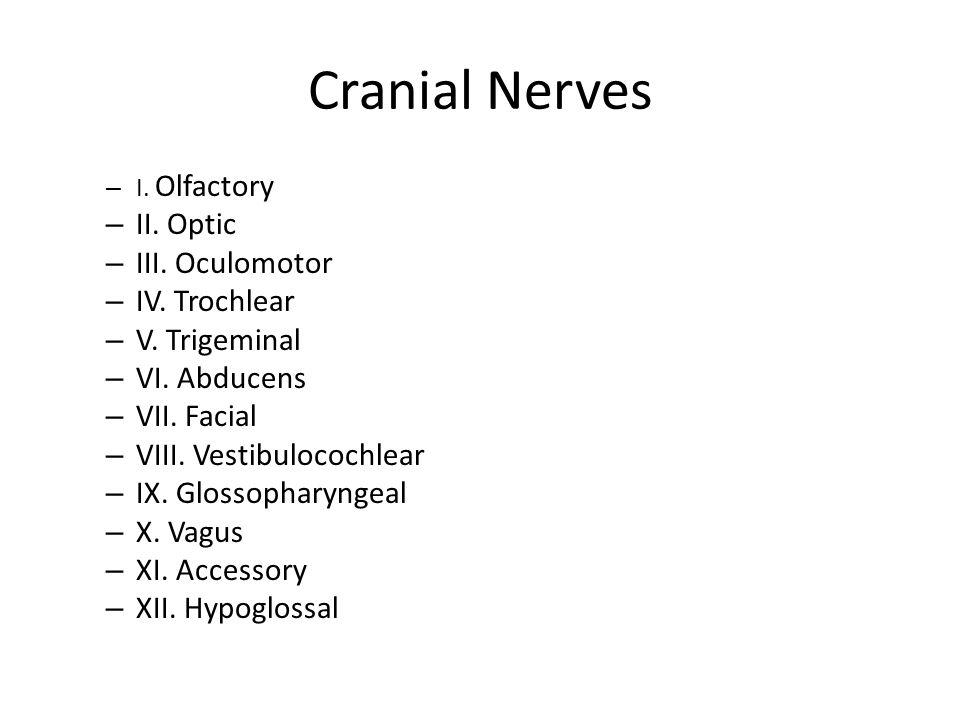 Cranial Nerves II. Optic III. Oculomotor IV. Trochlear V. Trigeminal