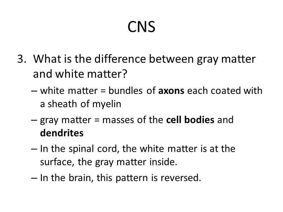 CNS What is the difference between gray matter and white matter