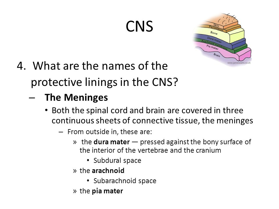 CNS What are the names of the protective linings in the CNS
