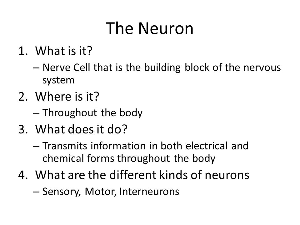 The Neuron What is it Where is it What does it do