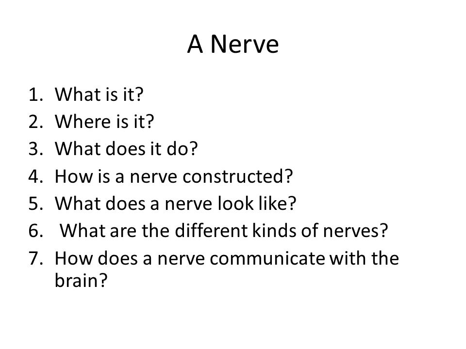 A Nerve What is it Where is it What does it do