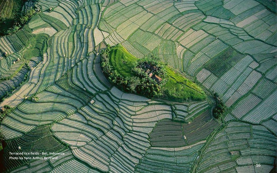 Terraced rice fields - Bali, Indonesia