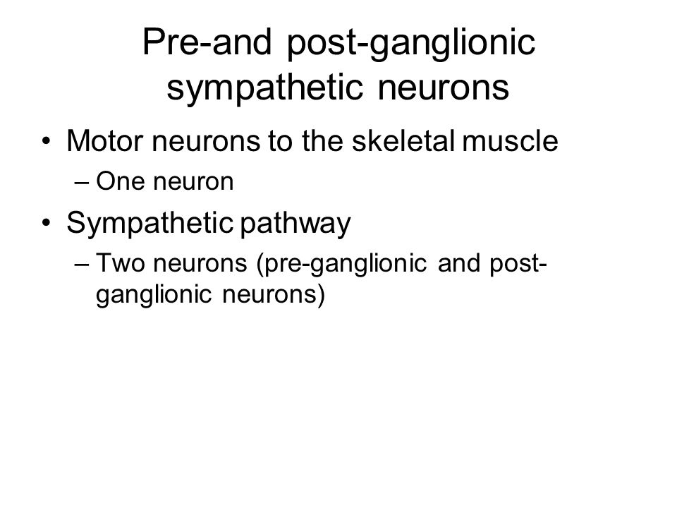 Pre-and post-ganglionic sympathetic neurons