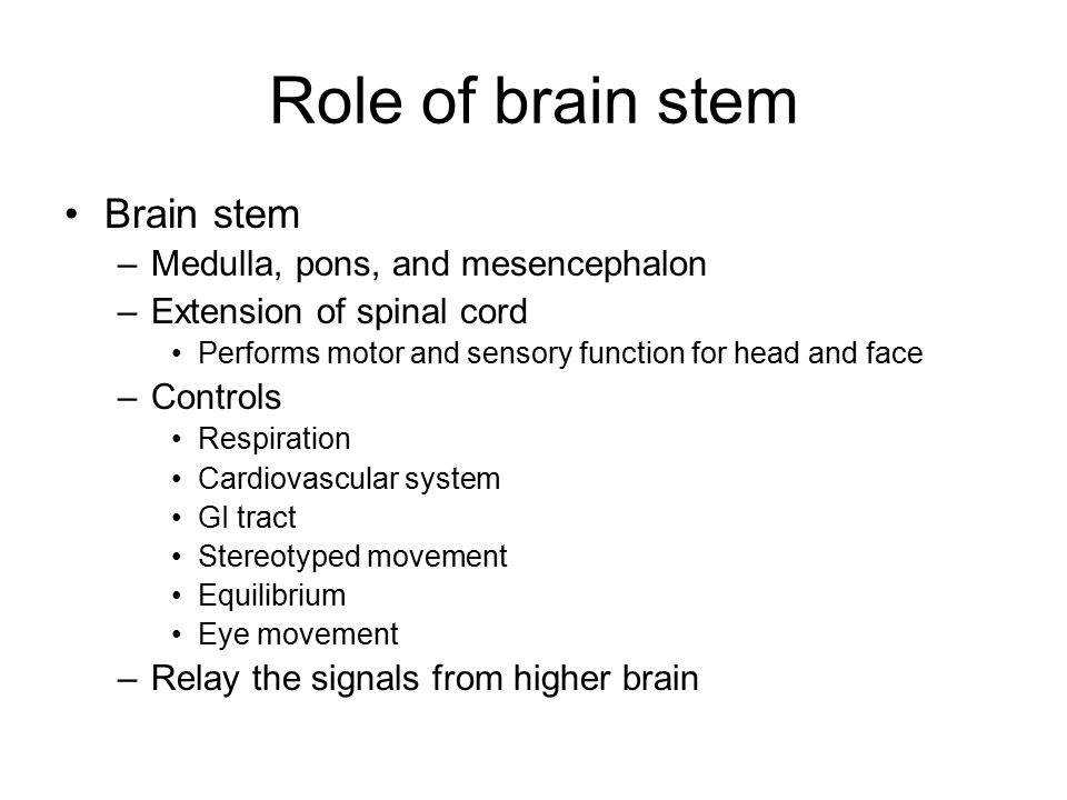 Role of brain stem Brain stem Medulla, pons, and mesencephalon