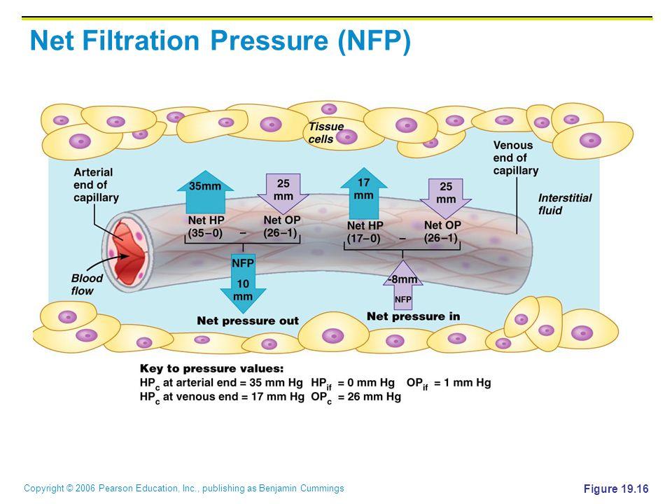 Net Filtration Pressure (NFP)