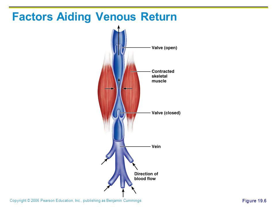 Factors Aiding Venous Return