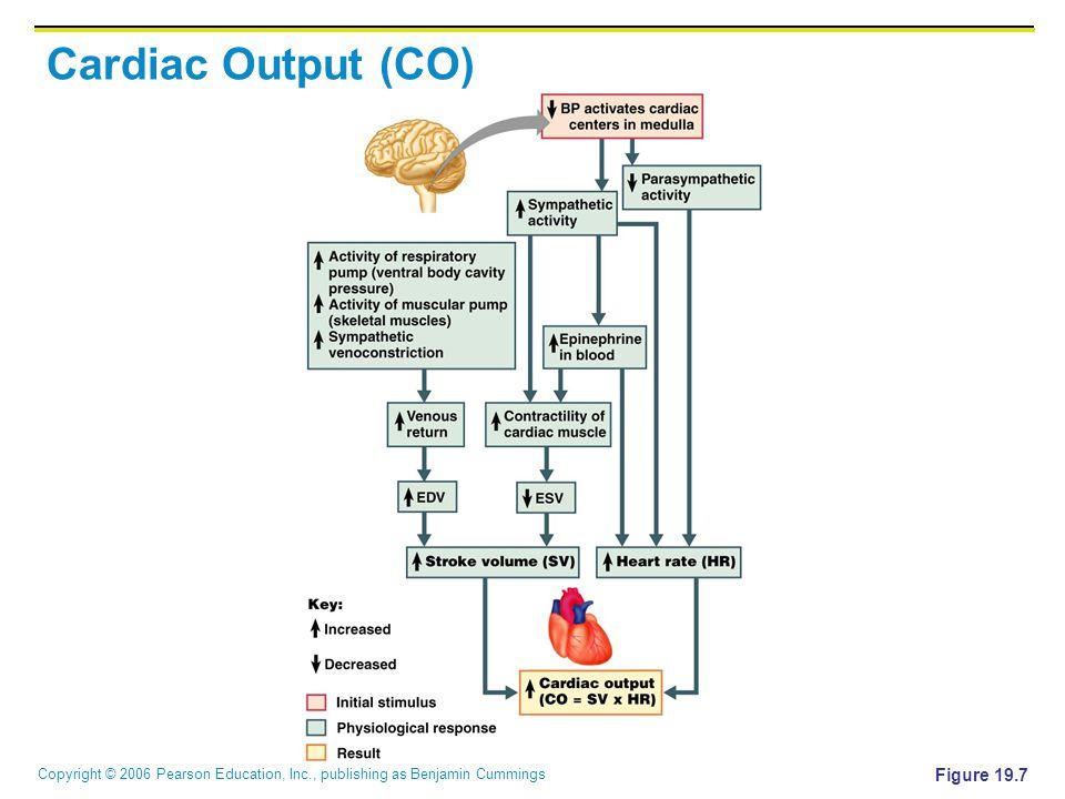 Cardiac Output (CO) Figure 19.7