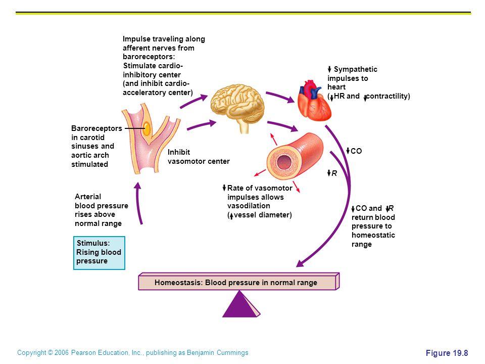 Figure 19.8 Impulse traveling along afferent nerves from