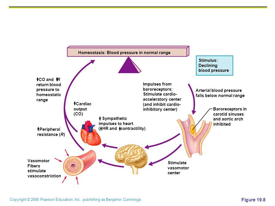 Figure 19.8 Homeostasis: Blood pressure in normal range Stimulus: