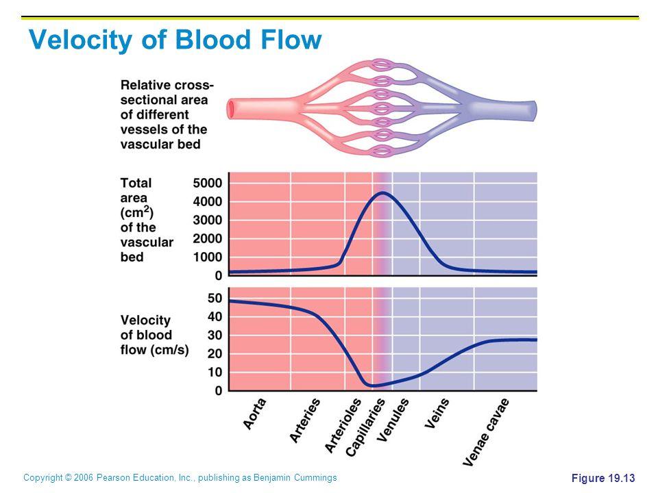 Velocity of Blood Flow Figure 19.13