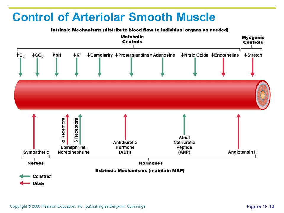 Control of Arteriolar Smooth Muscle