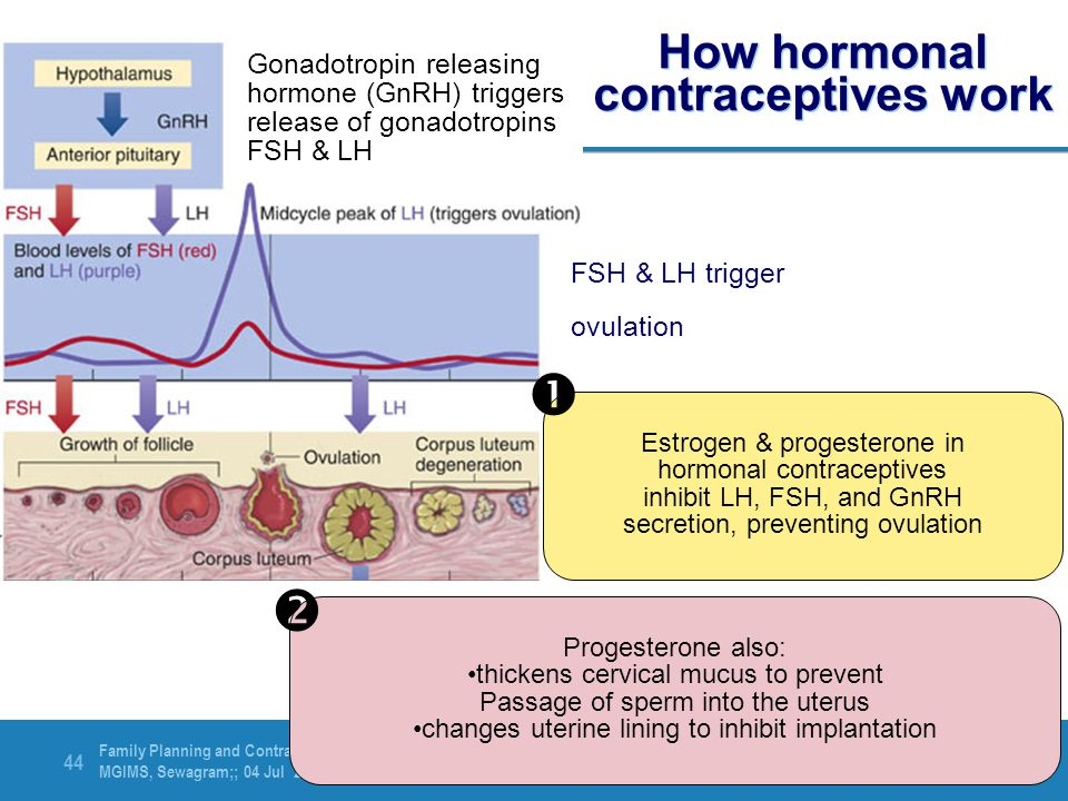 How hormonal contraceptives work