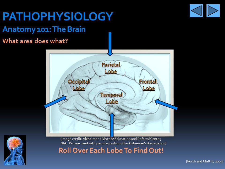PATHOPHYSIOLOGY Anatomy 101: The Brain