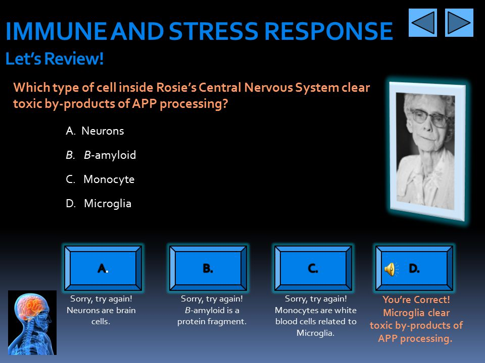 IMMUNE AND STRESS RESPONSE Let's Review!