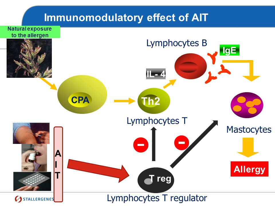 Immunomodulatory effect of AIT