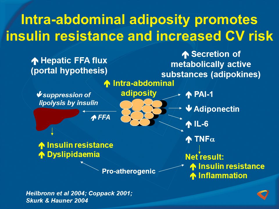 Intra-abdominal adiposity promotes insulin resistance and increased CV risk