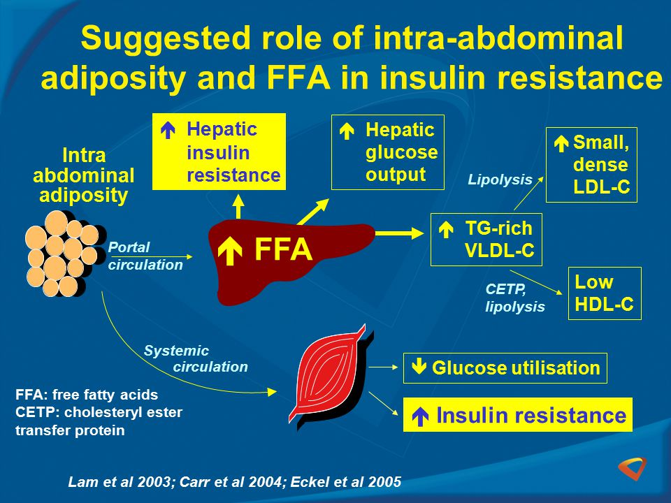 Suggested role of intra-abdominal adiposity and FFA in insulin resistance
