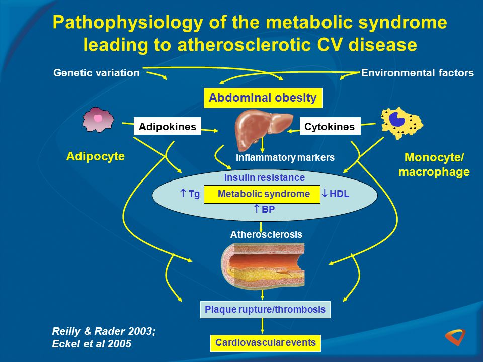Pathophysiology of the metabolic syndrome leading to atherosclerotic CV disease