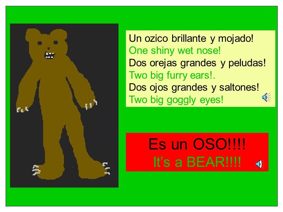 Es un OSO!!!! It's a BEAR!!!! Un ozico brillante y mojado!