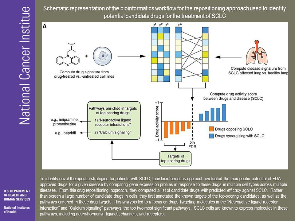 Schematic representation of the bioinformatics workflow for the repositioning approach used to identify potential candidate drugs for the treatment of SCLC
